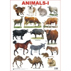 Educational Charts Series : Animals 1