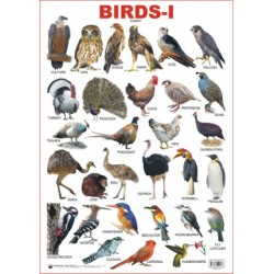 Educational Charts Series: Birds-1