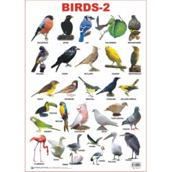 Educational Charts Series: Birds-2