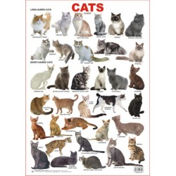 Educational Charts Series: Cats